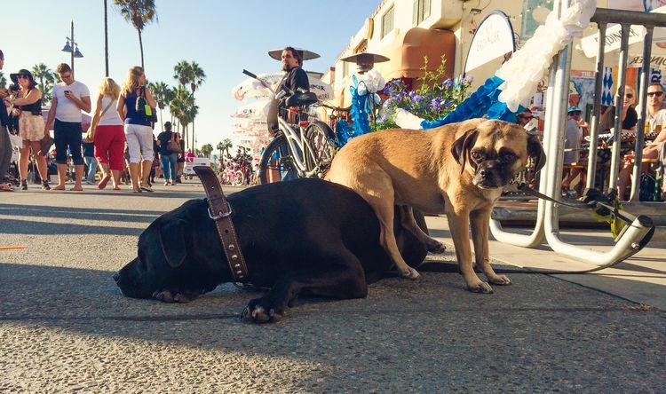 Funny Dogs California Day Dog Dogs Of EyeEm Domestic Animals Funny FUNNY ANIMALS Mammal Outdoors Sitting Smart Animals Summer Venice Beach