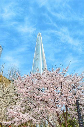 Sky Jamsil Flower Cherry Blossom Blossom Springtime South Korea Korea Spring Travel Nature Cherry Blossoms Tree Architecture Brooming Lotteworld Tower