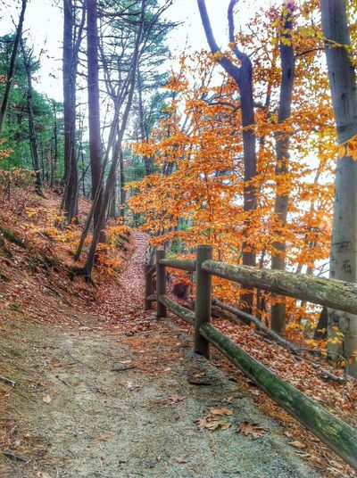 Hiking Hiking Trail Chosen Paths Nature