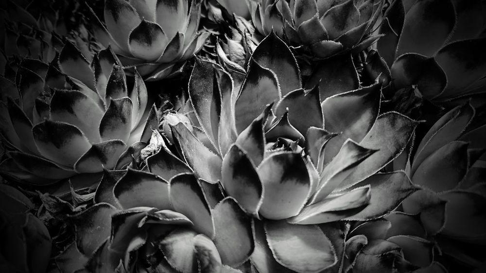 Monochrome Black And White Blackandwhite Nature 鉢植え