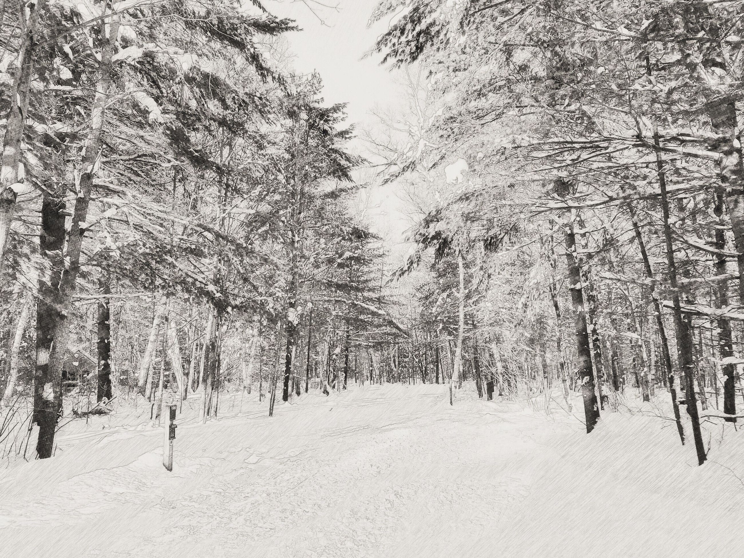 tree, snow, winter, cold temperature, tranquility, tranquil scene, nature, growth, season, beauty in nature, branch, scenics, tree trunk, landscape, covering, forest, weather, day, non-urban scene, woodland