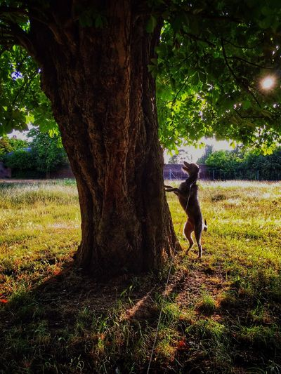 I Love My Dog LEO... The One Eyed Lurcher... Lurcher Sighthound Bushy Park United Kingdom Hugging A Tree Taking Photos Leo Chasing Squirrels