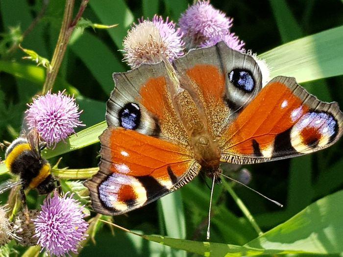 Bee Bij Leaf