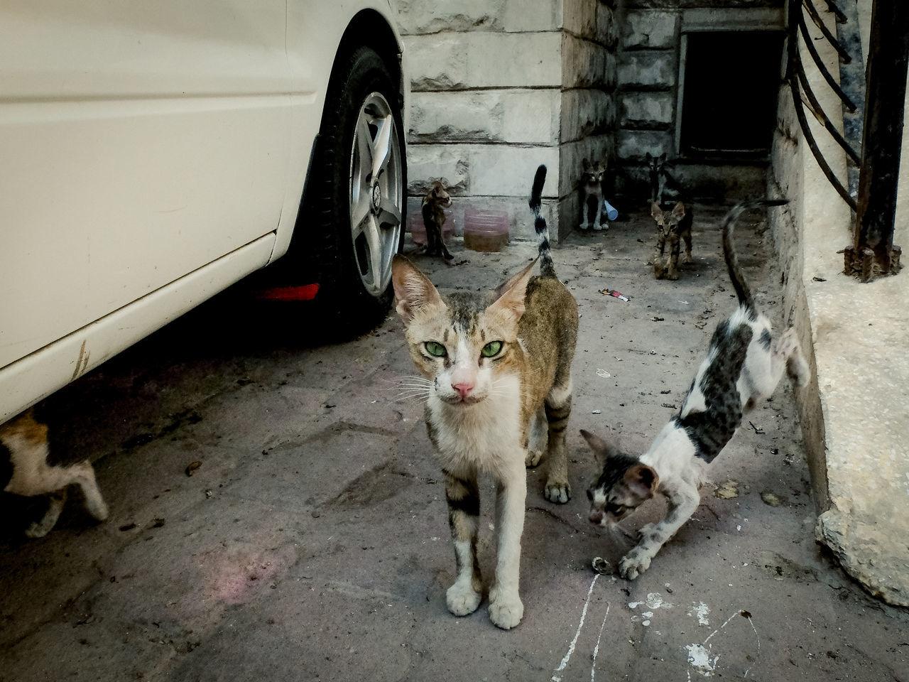 Stray kittens on street
