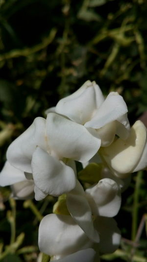 Flower Growth Beauty In Nature Plant Petal Focus On Foreground Fragility Outdoors Nature Freshness Flower Head Close-up Day White Flower no people Blury Background Love Nature Photography