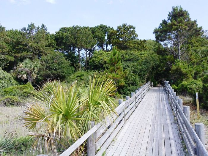Hilton Head Island Nature Natural Beauty Tree Growth Outdoors Day No People Nature