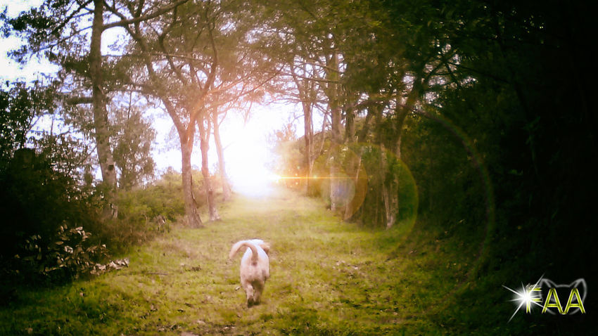 Animal Themes Beauty In Nature Day Dog Domestic Animals Forest Full Length Grass Mammal Nature No People One Animal Outdoors Pets Sky Tree
