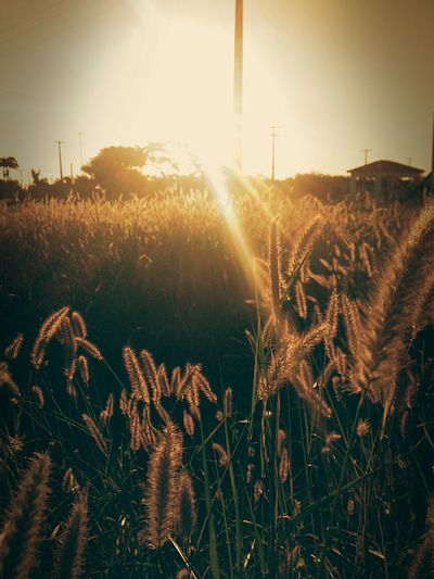 Sun shining over field