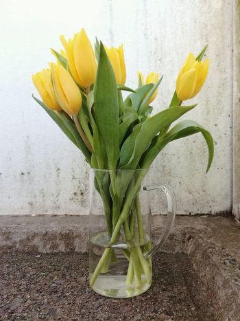 Tulips Yellow No People Tulips🌷 Yellow Tulips Flowers Yellow Flowers Vase Of Flowers Beautiful Flowers Close-up Freshness