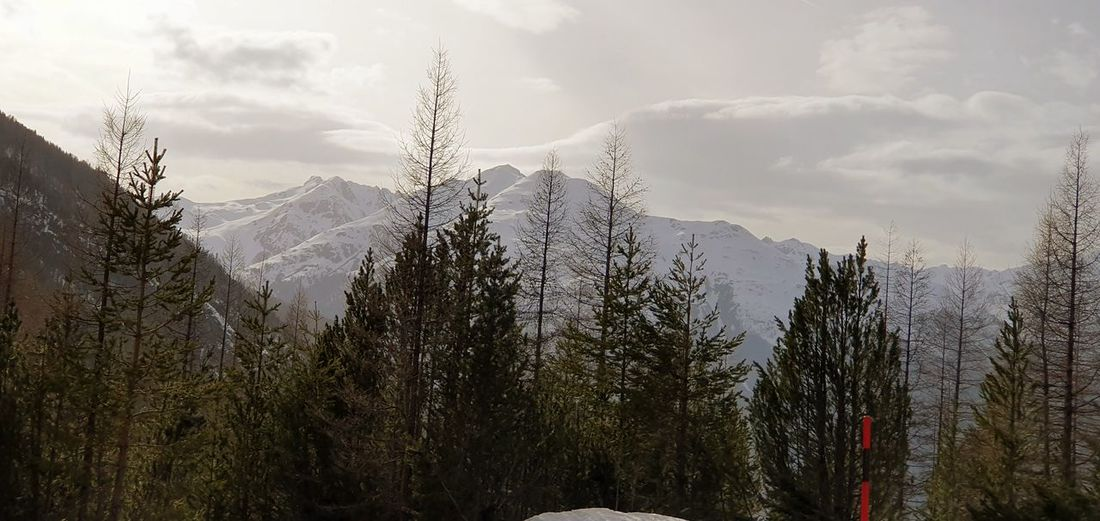 Alps Tree