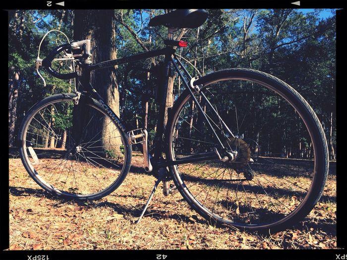 The new steed. Bikeporn Schwinn Park