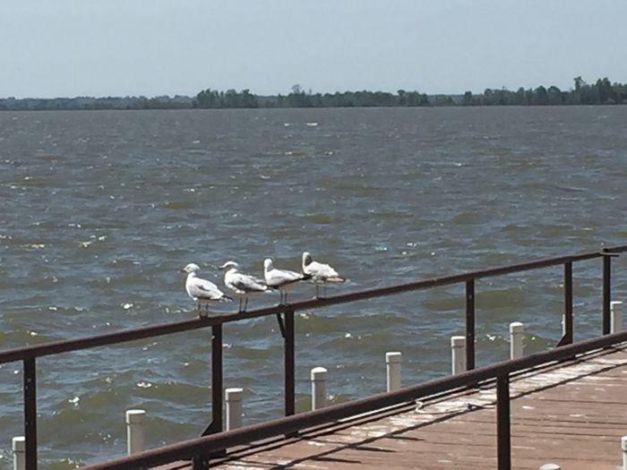 Water Bird Vertebrate Railing Group Of Animals Animals In The Wild Animal Themes
