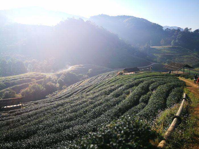 Mountain Nature Beauty In Nature Mountain Range Green Color Thailand Chiang Mai   Thailand