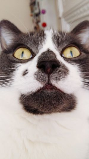 I am a crazy cat lady introducing Molly Catoftheday Cats Stunned London Pet Photography  Pets