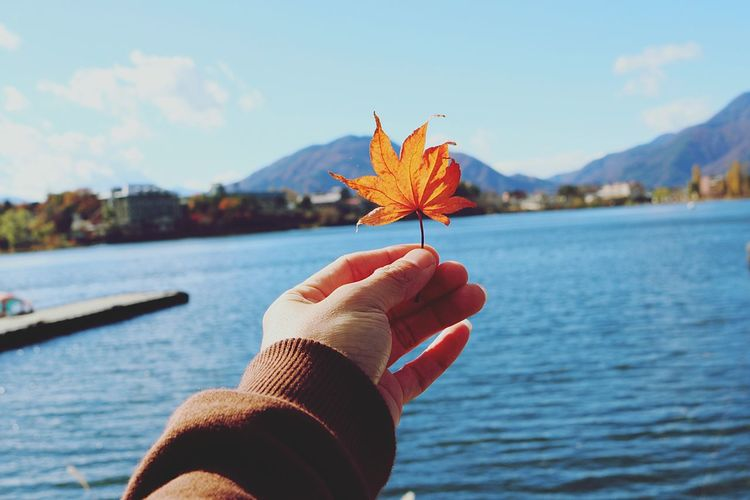 Close-up of hand holding maple leaf by lake during autumn