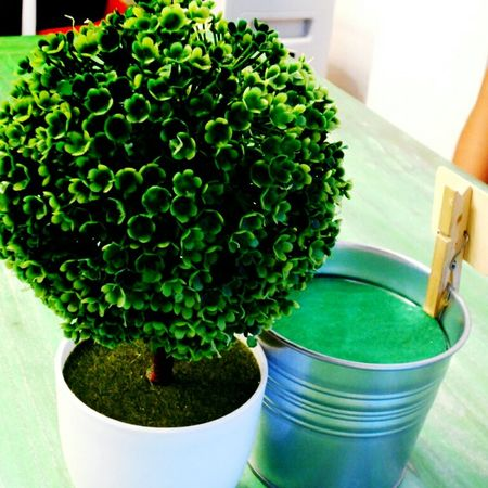 Taking Photos Check This Out Photos Green Green Green Green!  Trees Small Pods Centrepiece March Showcase Showcase March