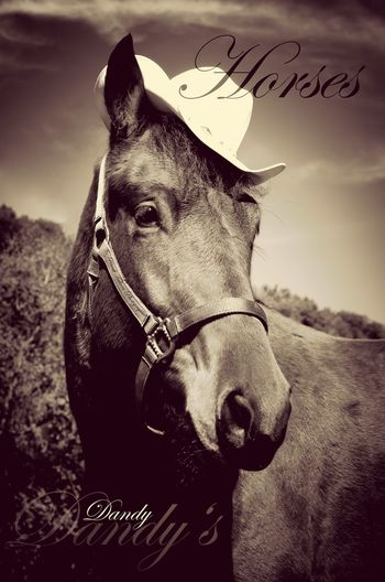 One Animal Horse Domestic Animals Outdoors Animal Themes Portrait Nature Mr. Ed Hat Dandy Sepia