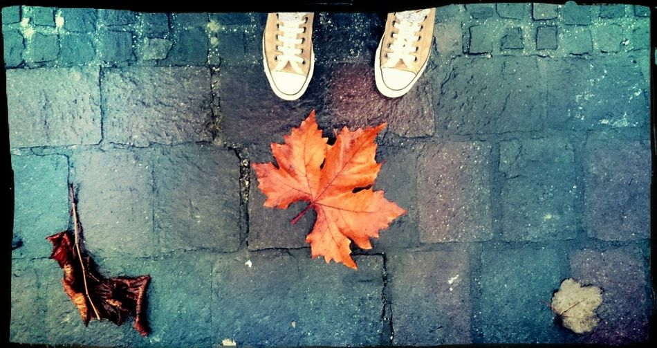 A DecemberAfternoon. Walking Around Autumn Colors Hello December From My Point Of View