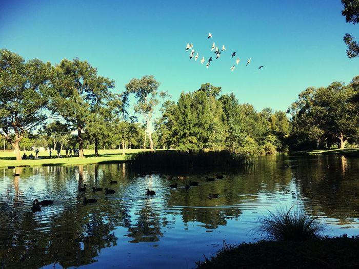 Birds flying over lake against trees