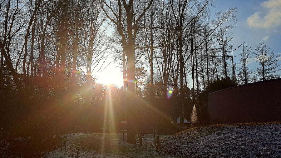 Bare Tree Beauty In Nature Kalte Temperatur In Rostock--2018 Outdoors Sunlight Winter