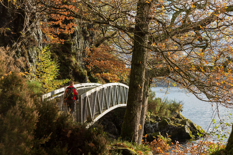 A walker crosses a man made metal bridge along a public footpath around the edge of Loch Loman, Scotland on a sunny autumn day. Autumn Beauty In Nature Bridge Bridge - Man Made Structure Change Connection Day Footbridge Forest Growth Land Nature Outdoors Plant River Travel Tree Trunk Water