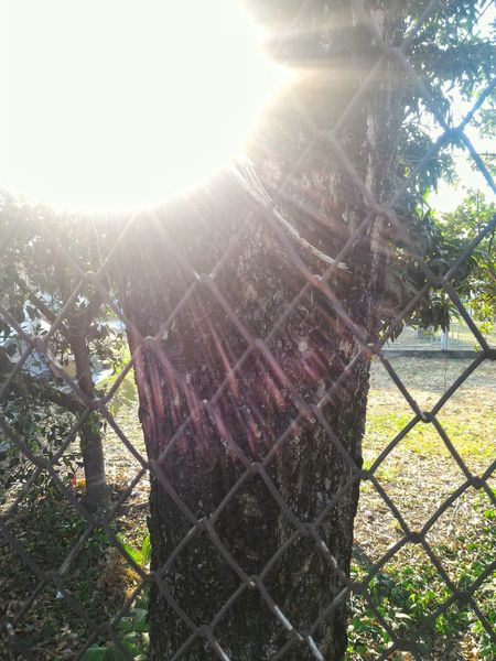 Sunlight Tree Sunbeam Nature Day No People Outdoors Beauty In Nature Sun Sky Very Bright Very Sunny Serrated Glare Tree The City Light EyeEm Best Shots