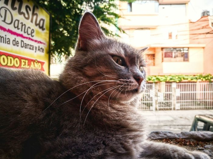 Animal Themes Pets Domestic Animals Domestic Cat Cats Feline Gato Cat Migatomodelo Mamagato
