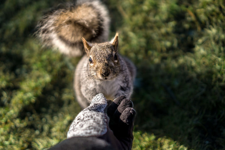 Animal Animal Themes Animals In The Wild Boston Close Up Close-up Cute Day Domestic Animals Domestic Cat Feeding  Feline Gaze Glove Hand Mammal Nature No People One Animal Outdoors Park Pets Squirrel Wildlife