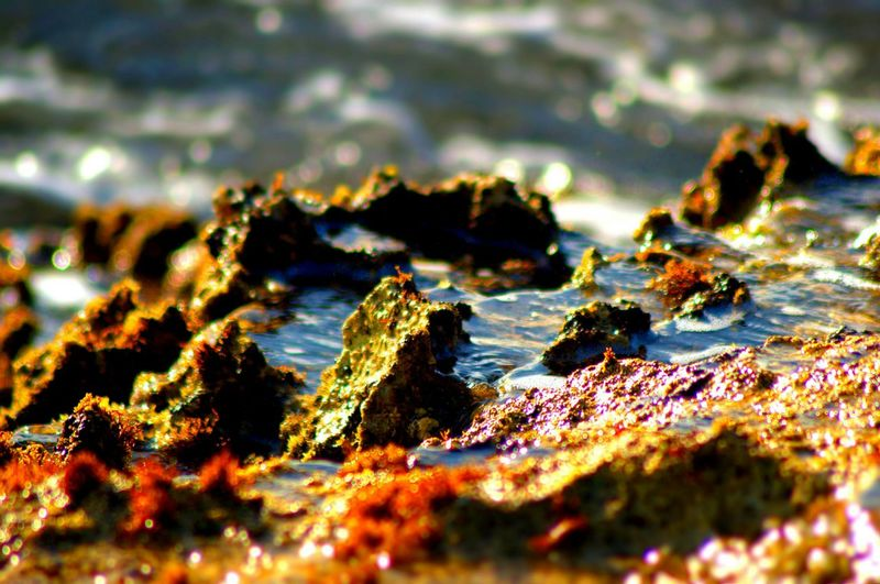 Saltwater pockets, or tidepool. Life Is A Beach Hello World Natural Beauty At The Beach Nature Photography Outdoor Photography Reef Near The Shore Creative Tranquility Outdoor Beach Photography Perspectives On Nature