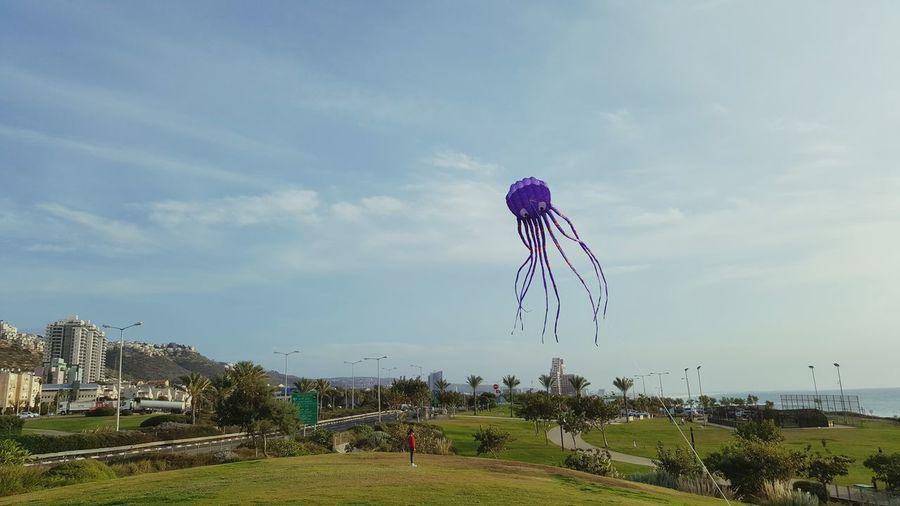 Kite Octopus Octopuskite Israel
