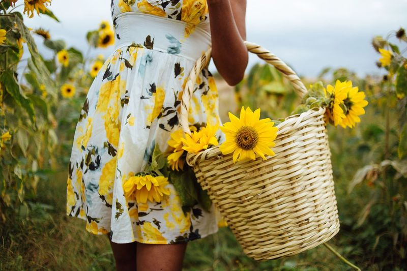 Basket full of sunshine Plant Flowering Plant Flower Yellow Nature One Person Flower Head Sunflower Beauty In Nature Freshness Unrecognizable Person Holding Close-up Lifestyles Focus On Foreground Land Growth My Best Photo