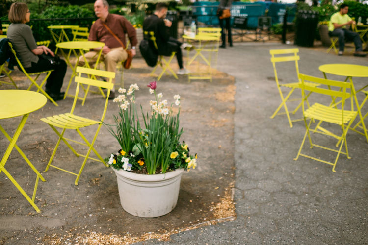 Flower Seat Plant Flowering Plant Potted Plant Chair Group Of People Real People Sitting Women Day Table Nature Outdoors Cafe Lifestyles People Growth Sidewalk Cafe Men Flower Pot