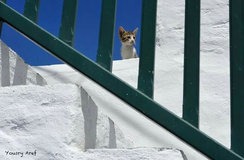 He will come Hello Kitty Kitty!  Show Me Your Kitty Cat Cat Hanging Out Hello World Photography Petlovers Greece