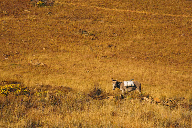 Donkey standing on field