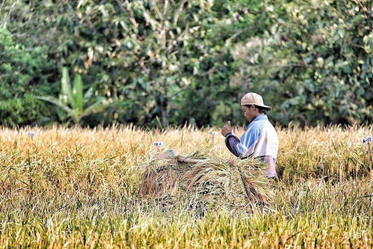 Shootermag Paddy Field Get Lost Indonesia_allshots
