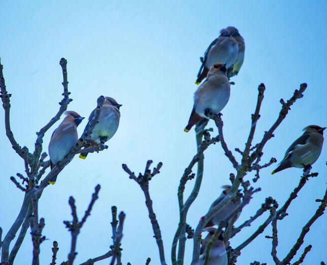birds in the