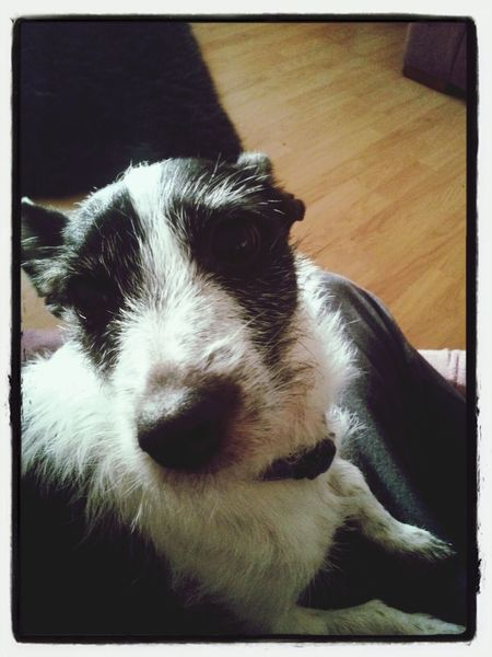 Relaxing Watching Tv Galaxy S3 & EYEem Editing. My Dog <3