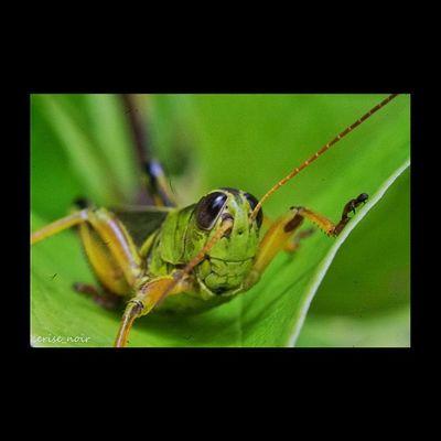 Macroaddictsanonymous Anthropods_anonymous