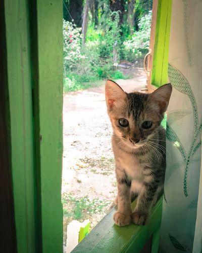 cat Pets Portrait Looking At Camera Window Sitting One Animal Mammal