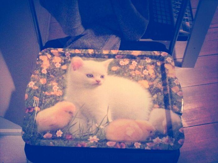 Kitty Tray!