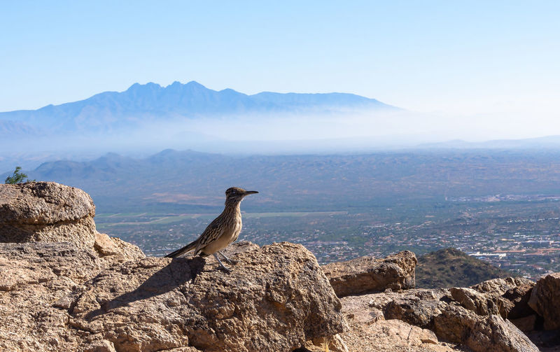 Road runner with scenic view of mountain range against sky