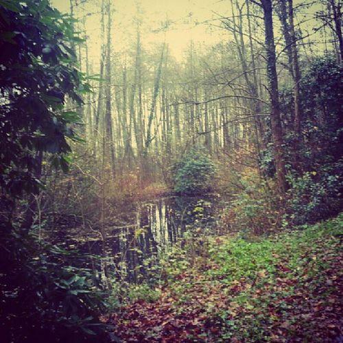 [When darkness fallsAnd surrounds you] Germany Bredbeck Beautiful Wood littlesea badweather dark
