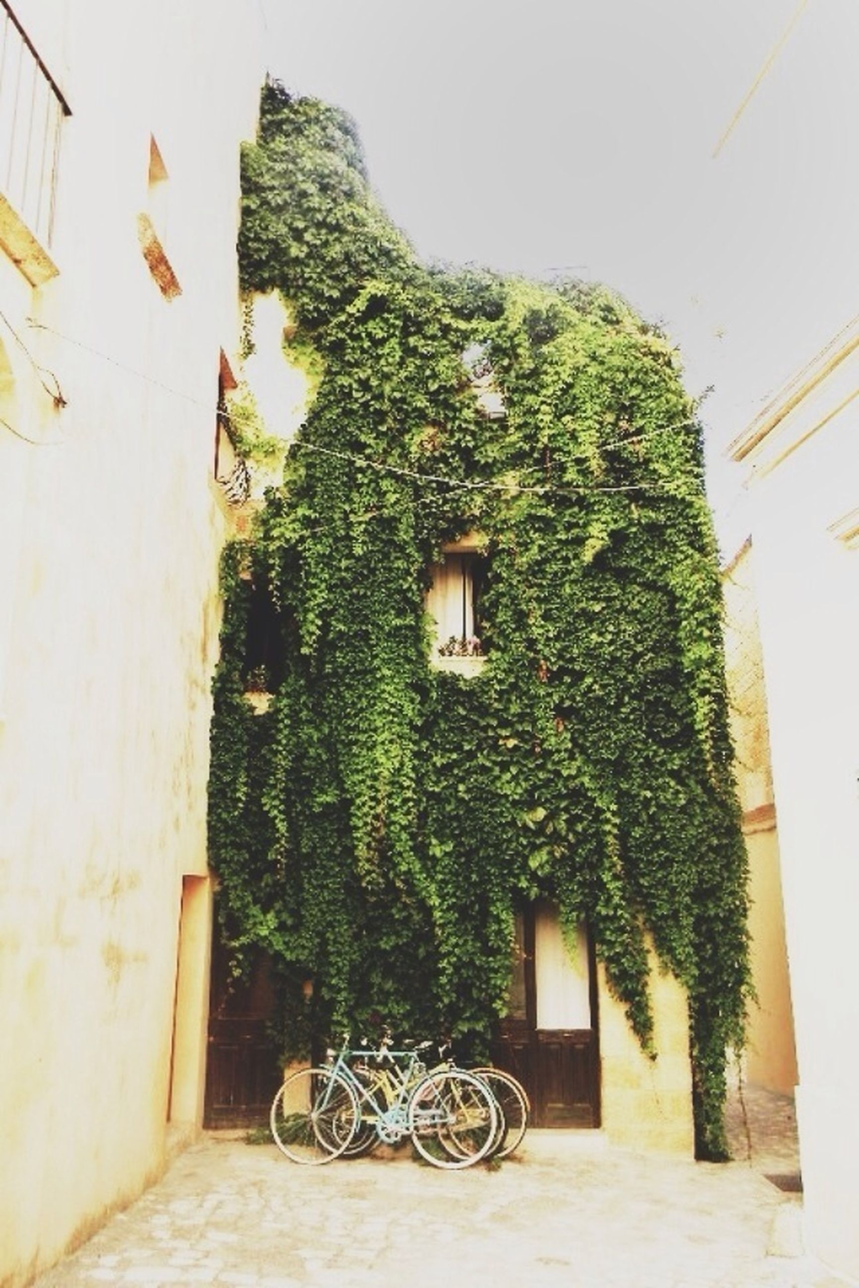 building exterior, built structure, architecture, potted plant, plant, house, growth, bicycle, green color, tree, window, wall - building feature, residential building, wall, residential structure, no people, day, nature, outdoors, flower pot