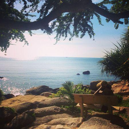 Tea Is Healthy Vietnam Relaxing Sea
