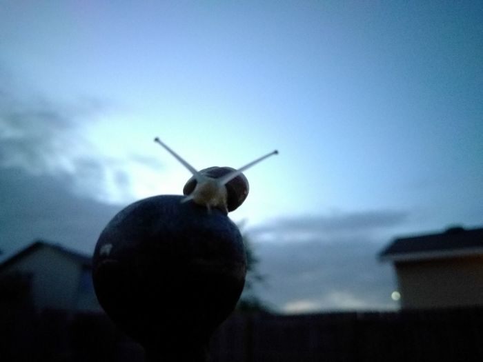 Silhouette Close-up Nature Animal Snail No Filter No Edits Blurry