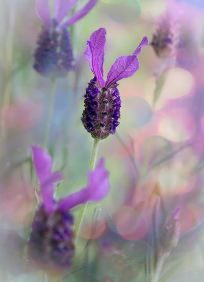Blossoms  Dew