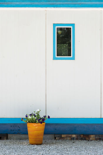 Minimalism Minimal Orange Color Blue Window Bungalow Flowerpot Architecture Built Structure Building Exterior Potted Plant Plant Building Wall - Building Feature Day No People Nature Outdoors Growth Flower Pot House Flowering Plant Flower White Color Entrance Bucket Country House Exterior Settlement Residential Structure