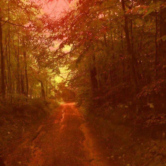 Enchanted Forest EyeEm Nature Lover Walkintheforest