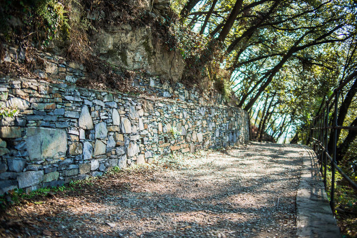 Hiking Path Portofino Natural Regional Park Road Sunny Trekking Cliff Day Deciduous Forests Fence Forest Liguria Mountain Nature No People Outdoors Path In The Woods Pathway Shadows Stone Walls Tree Walking Wall - Building Feature Way Forward