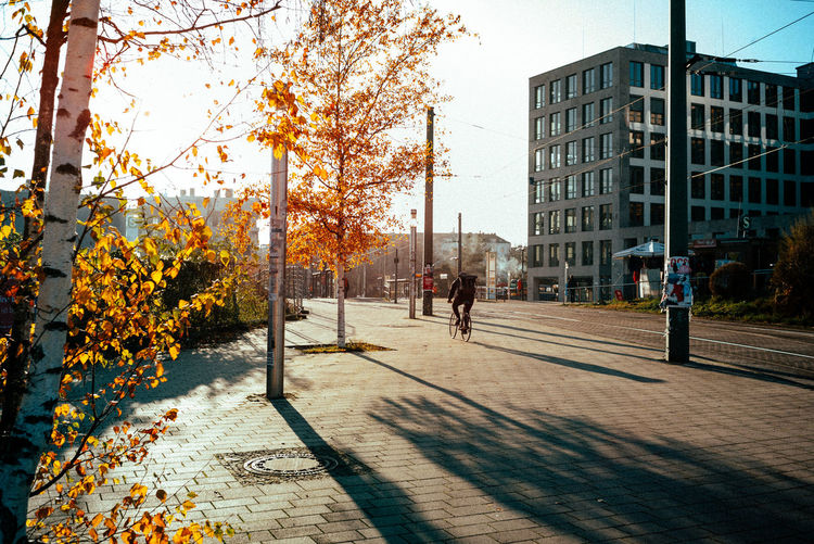 Trees in city during autumn